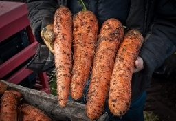 thumbs_harvesting-carrots