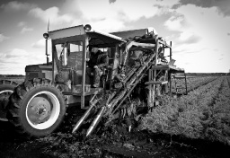 thumbs_harvesting-tractor